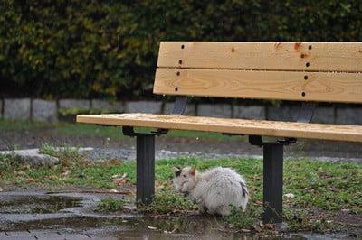 where do cats hide in the rain?