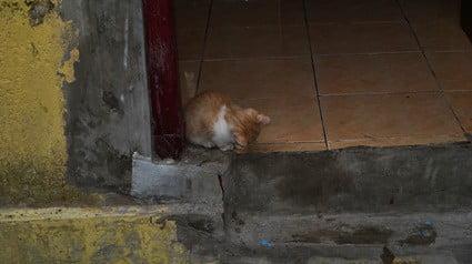 where do cats hide outside when it's raining?