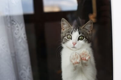 why-do-cats-rub-their-paws-on-windows