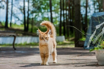 why do cats sometimes disappear for days?