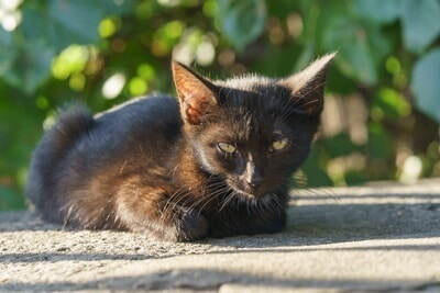 why does my black cat look brown in the sun?
