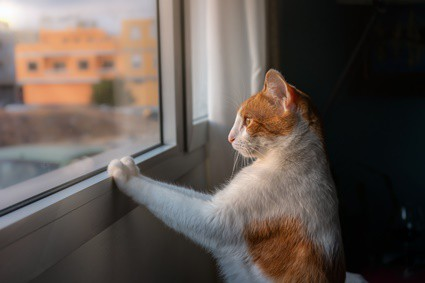 why does my cat paw at windows?