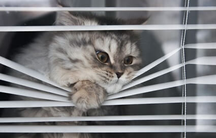 why does my cat scratch windows?