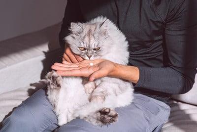 can-cats-sense-their-own-death?