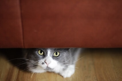 cat is hiding and acting weird