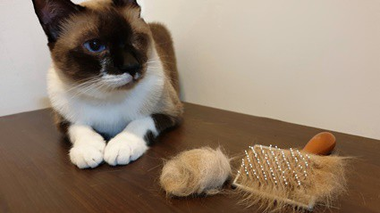 cat-trying-to-cough-up-hairball-but-cant
