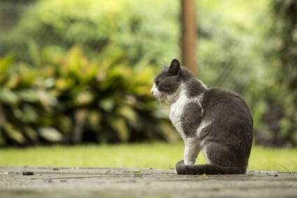 do cats wander off to die?