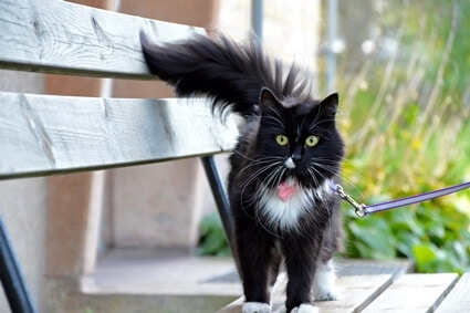 do cats whiskers grow as they get fatter?