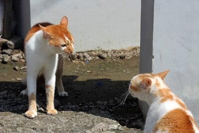 how do cats assert dominance?