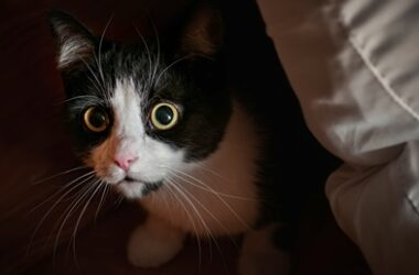 why do cats hide in dark places?