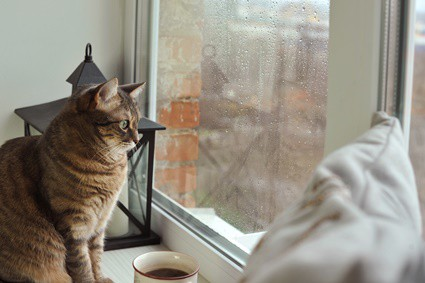 can cats sense bad weather?