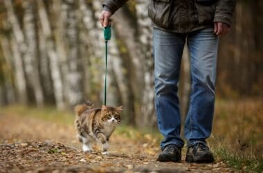 can you walk a cat on a lead?