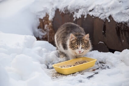 do cats eat more when it's cold?