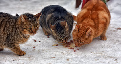 do cats need more food in cold weather?