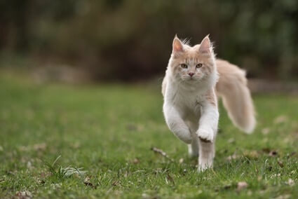 how do cats move their tails?