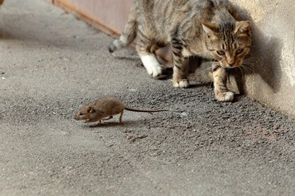 how do you stop cats catching mice?
