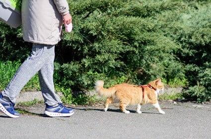 how long should I walk my cat?