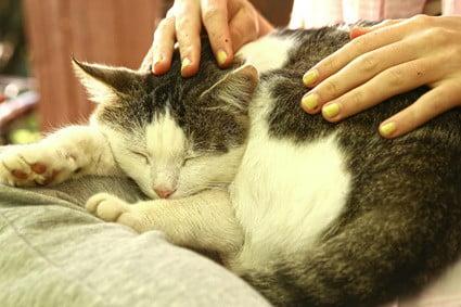 how many hours should a senior cat sleep?