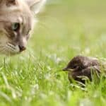 how to stop cat bringing in birds and mice