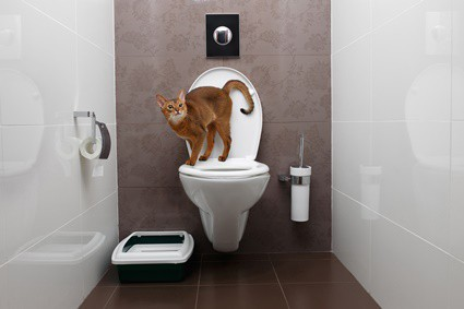 is it bad for cats to drink out of the toilet?
