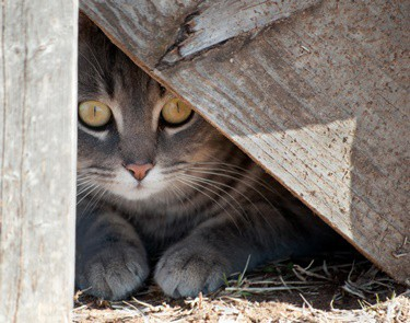 what to do if your cat is hiding and wont come out