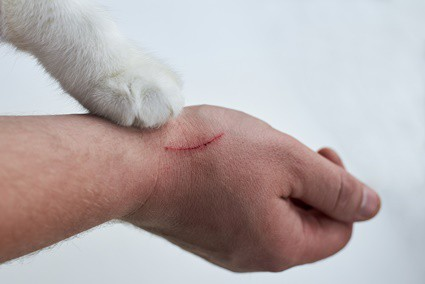 why-do-cat-scratches-itch-and-swell?