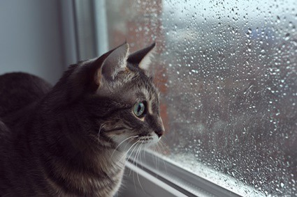 why do cats go crazy when it rains?