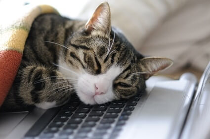 why do cats lay on electronics?