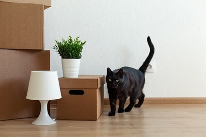 How To Cope With Rehoming A Cat