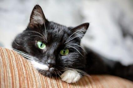 cat behavior after returning home