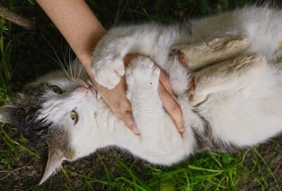 how do cats play with humans?