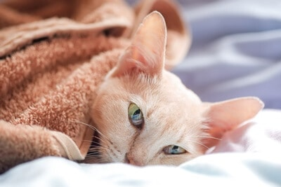 how to comfort a dying cat at home