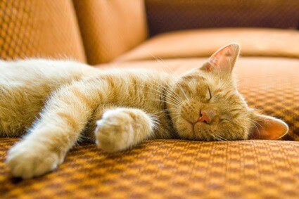 rapid breathing in cats while sleeping