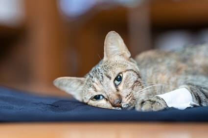 should I leave my dying cat alone?