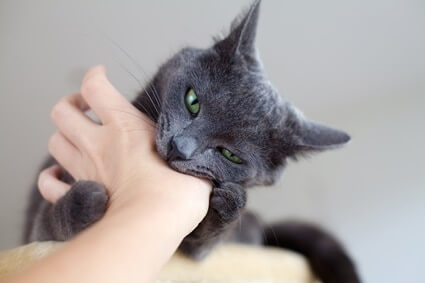 why do cats give gentle bites?