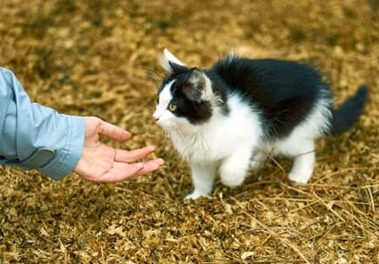 why do cats like to hold your hand?