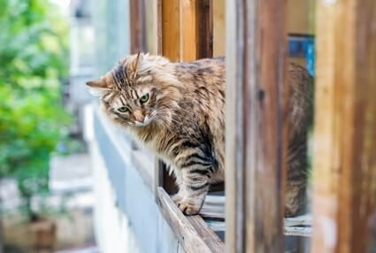 why do cats run away when you try to pet them?