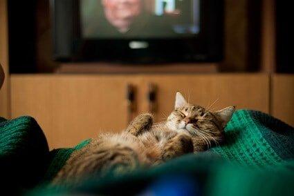 do cats like tv left on?