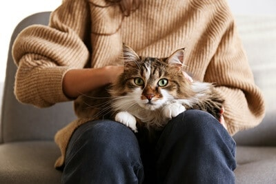 why do cats like laps so much?