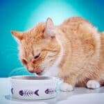 will cats starve themselves if they don't like the food?