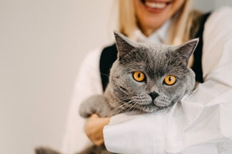 Are British Shorthair Cats Cuddly?