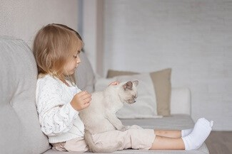 Are Burmese Cats Cuddly?