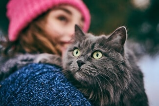 Are Russian Blue Cats Cuddly?