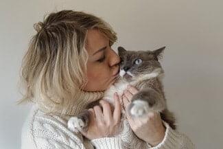 Are Siamese Cats Cuddly?