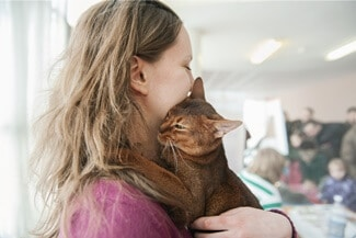 Do Abyssinian Cats Like to Cuddle?