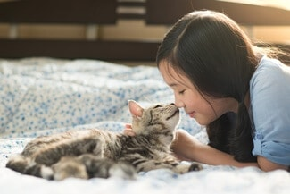 Do American Shorthair Cats Like to Cuddle?
