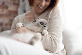Do Birman Cats Like to Cuddle?