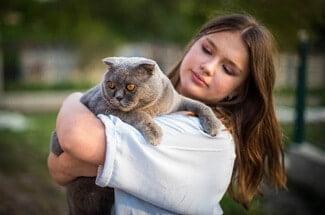 Do Scottish Fold Cats Like Cuddling?