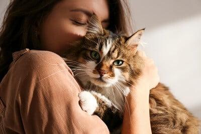 cuddly cat breeds