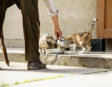 dangers of feeding stray cats
